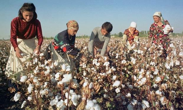 Cotton-in-Uzbekistan-011